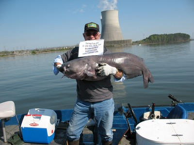 April 72 lb Blue cat