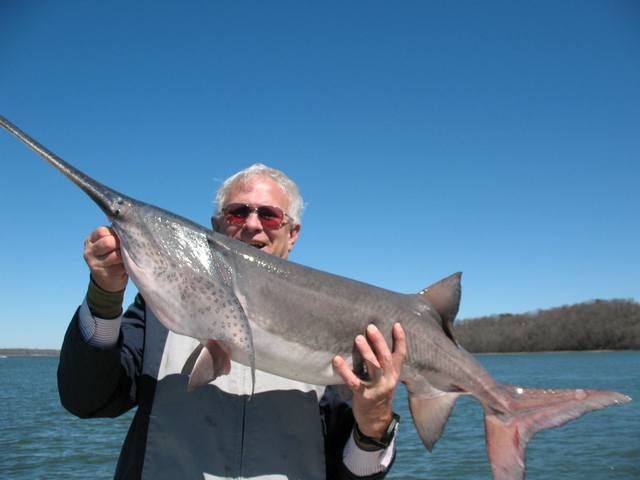 Good looking paddlefish!