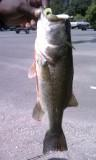 My 1st bass caught on a lure! Charlie Brewer of course :)