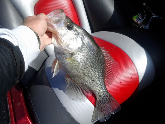 17 inch crappie, 3 lbs 1 oz. 1/19/2015