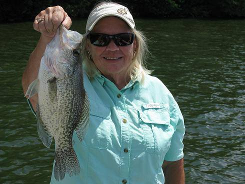 A 14.75 inch TARP crappie. We caught about 60 with close to 50 keepers - May 30, 2015.